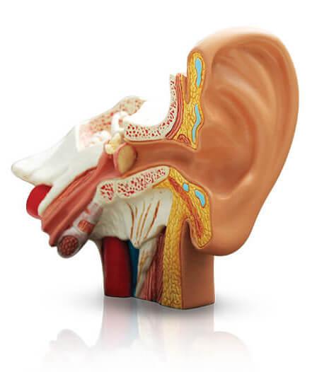 Poprawianie słuchu za pomocą plastrów medycznych EarMax
